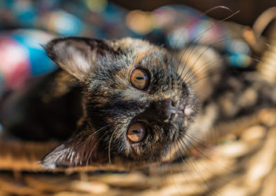 Kitty201811101-30025-small